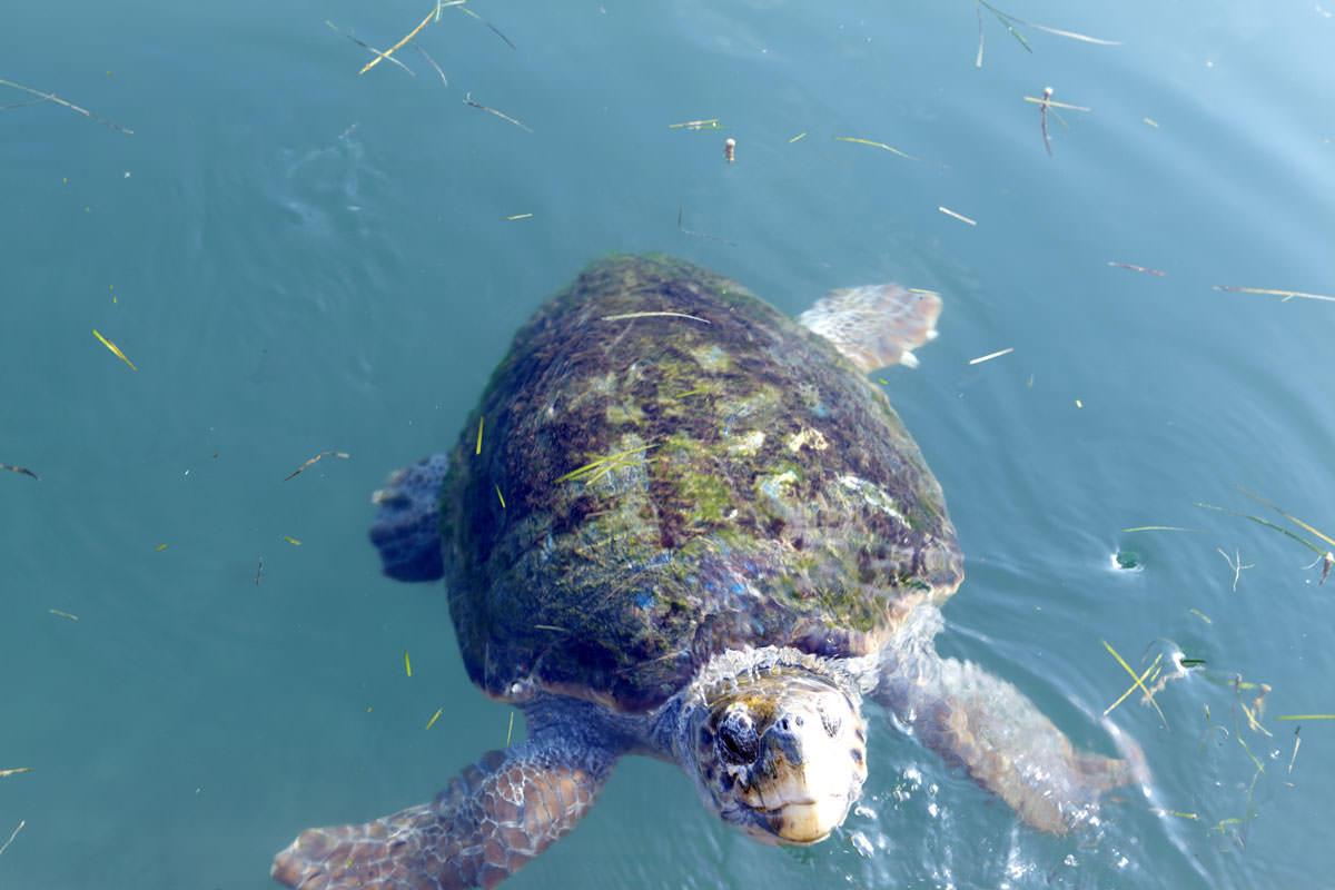 Mouikis Hotel - Location, Sea turtles